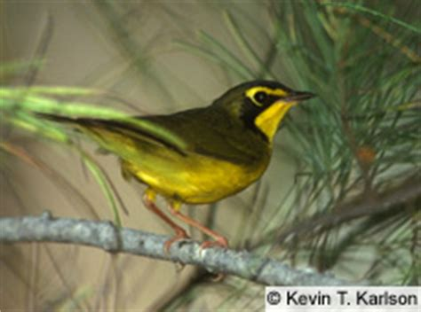 Quia - Bird Identification (Pictures AND Songs) 1