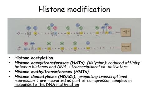 PPT - Human gene expression and genomic imprinting
