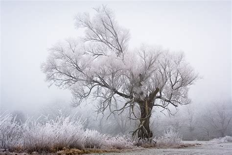 A Frosty Morning on the Rhine Photographed by Patrick