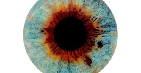 The Perfection Of 'I Origins' | KPBS